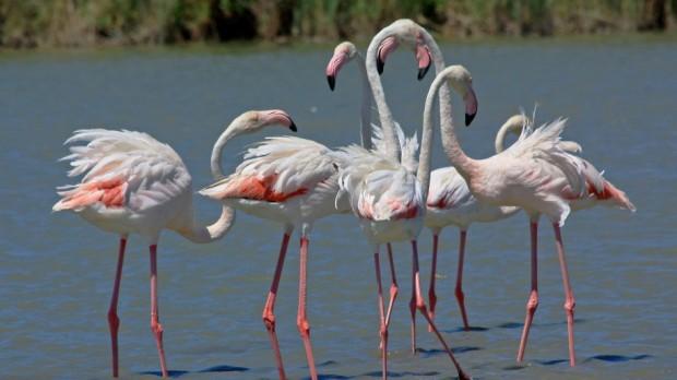 etawahcity.com flamingo