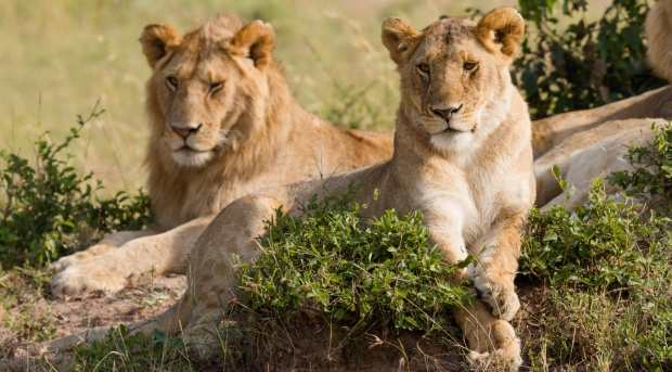 Etawah Safari Park
